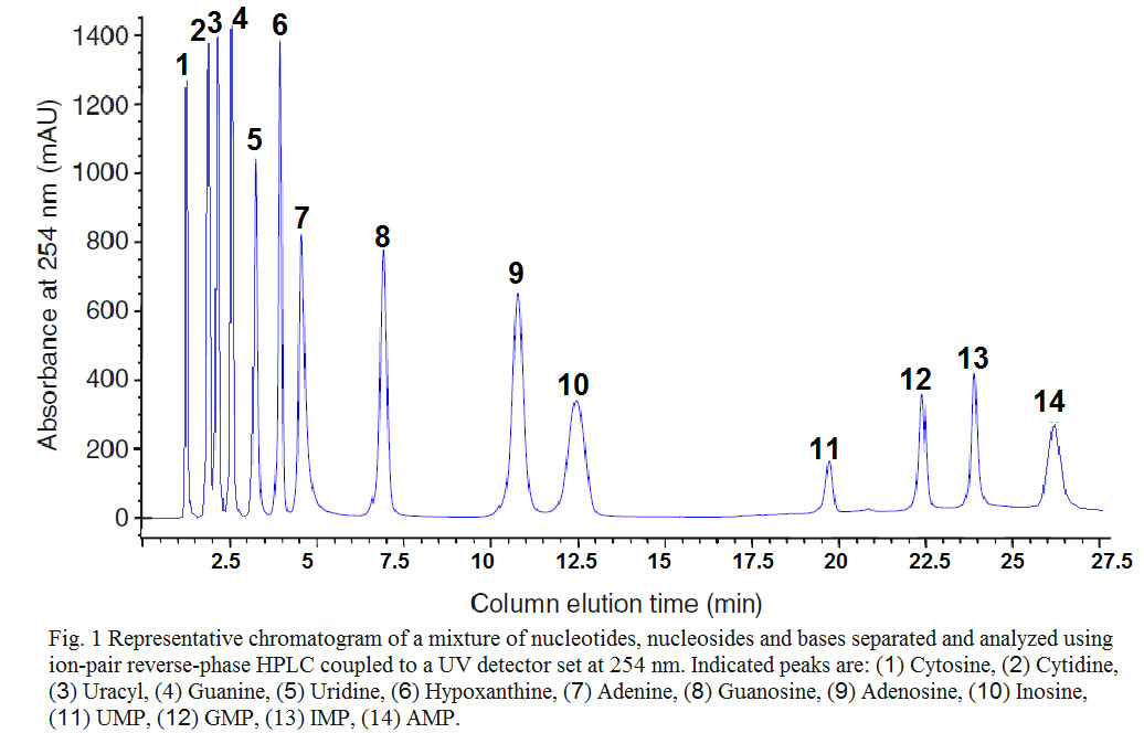 Nucleotide ion-pair reverse-phase HPLC